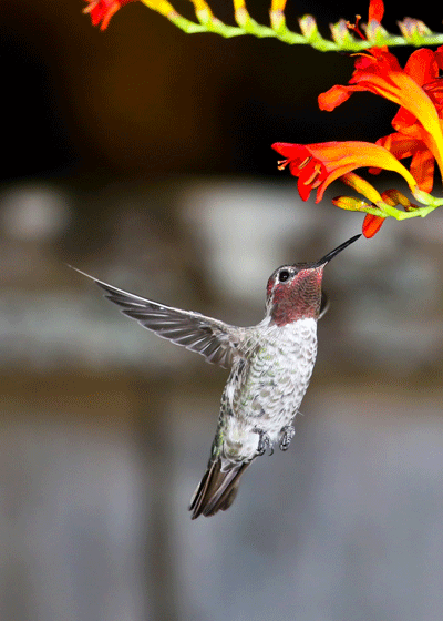 "hummingbird photo from Mark's ""Best of 2015"" Collection"